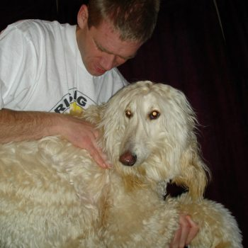 Chiropractor for Dogs-St. Peter Chiropractor-Rising Sun Chiropractic
